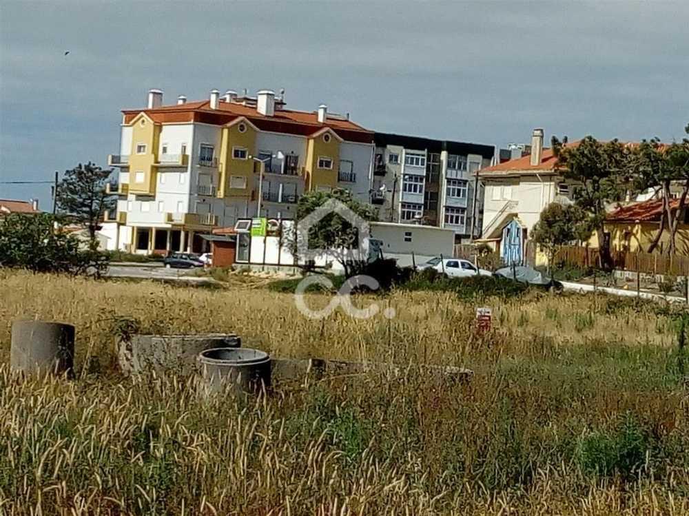 Vieira de Leiria Marinha Grande terrain picture 78399
