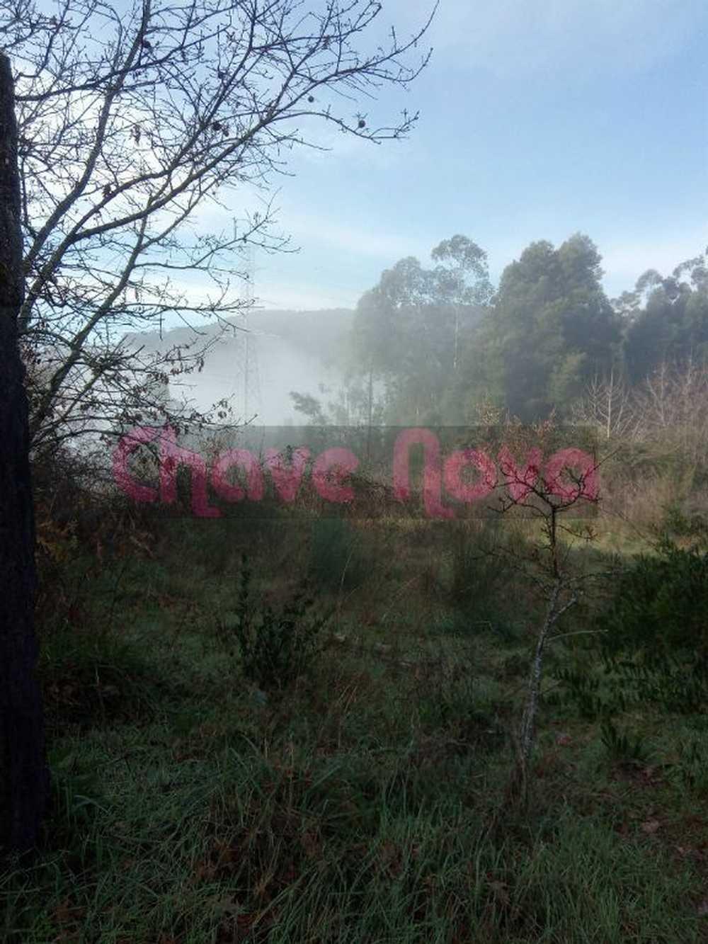 Vila Cova Penafiel terrain picture 70644