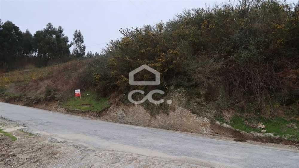 Pias Lousada terrain picture 77913
