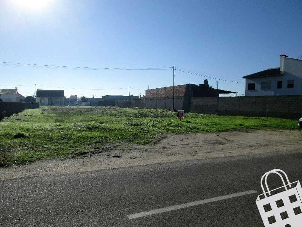 Vieira de Leiria Marinha Grande terrain picture 78255