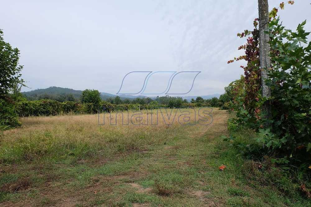 Ponte Vila Verde terrain picture 60112