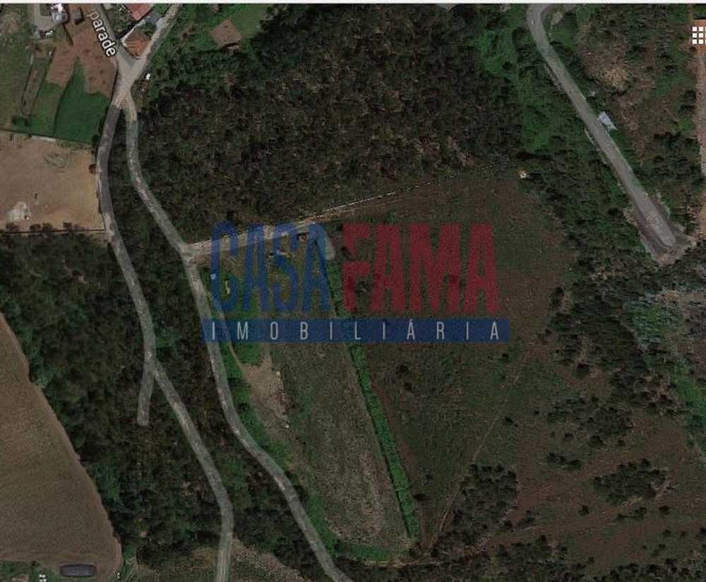 Cavalões Vila Nova De Famalicão terrain picture 82781