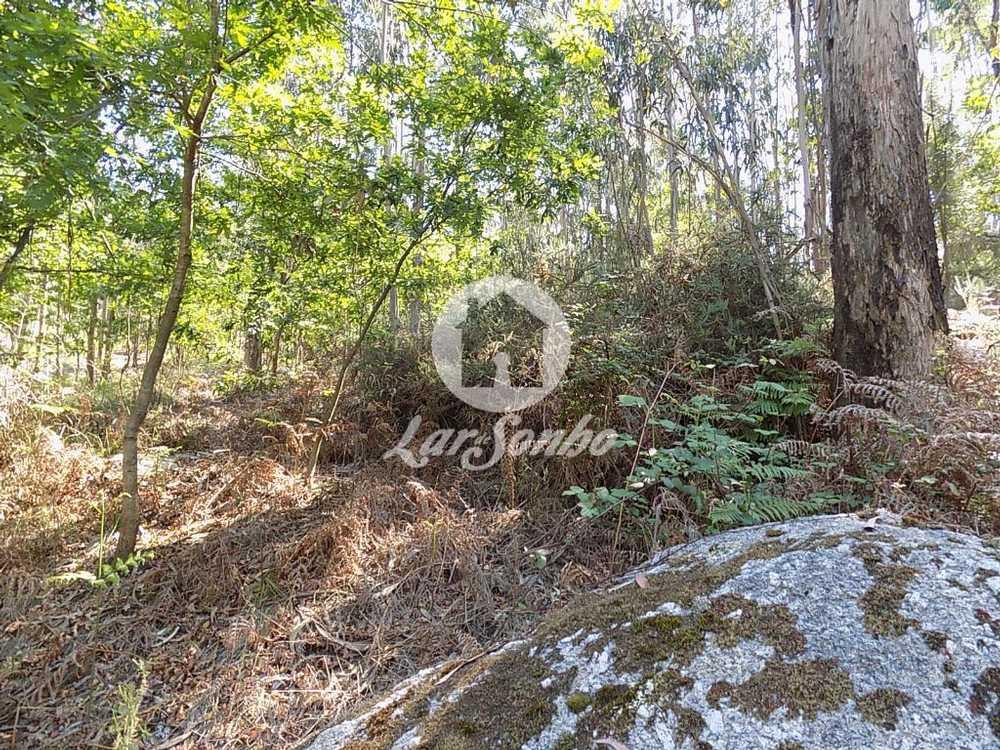 Sezures Vila Nova De Famalicão terrain picture 76340