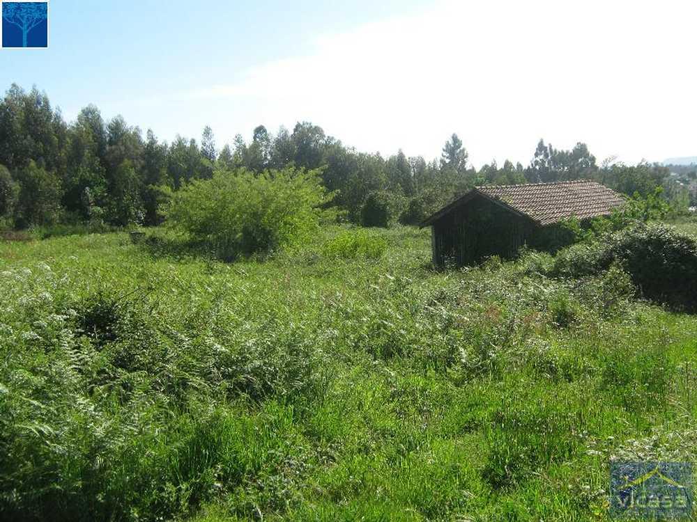 Mujães Viana Do Castelo terrain picture 58436