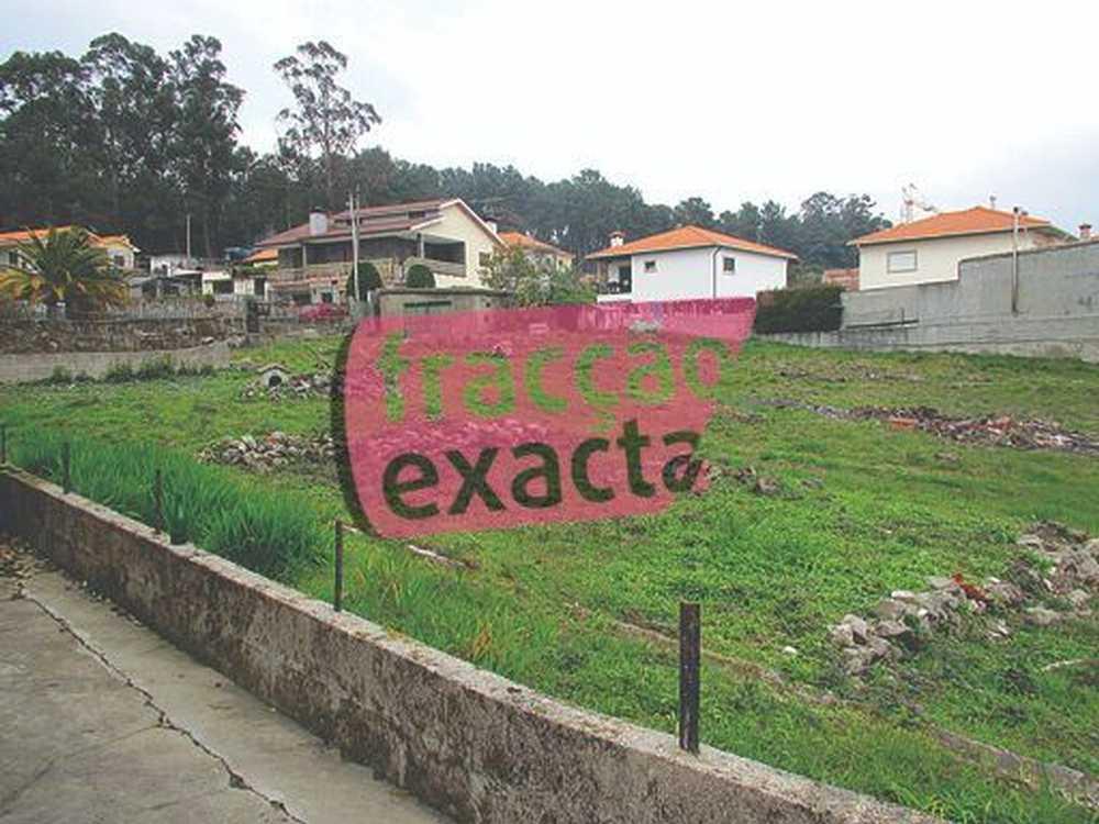 Mancelos Amarante terrain picture 80839
