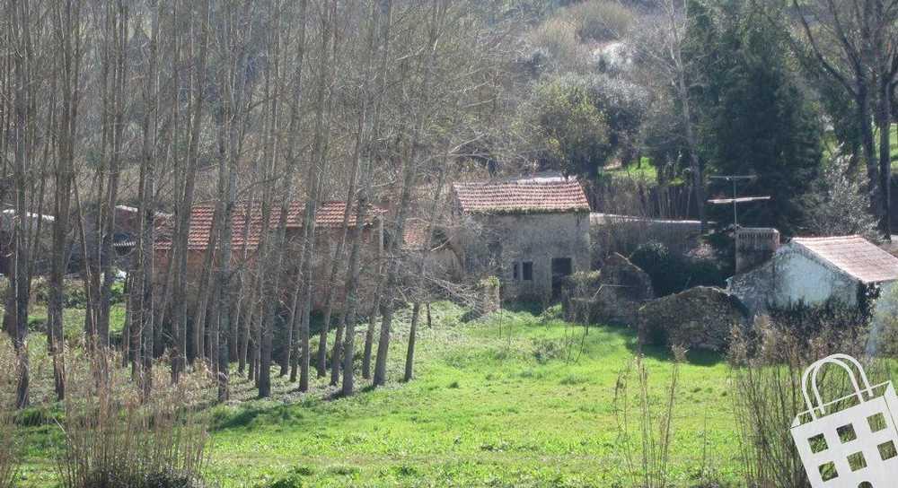 Alpedriz Alcobaça terrain picture 71120