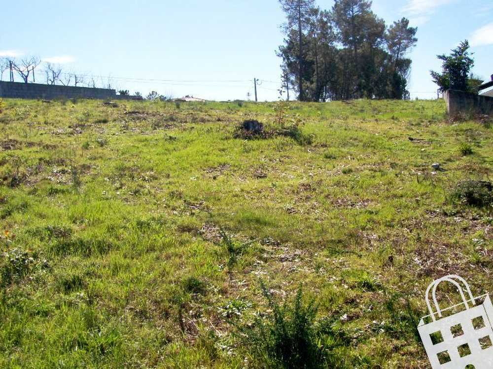 Oliveira de Baixo Viseu terrain picture 79892