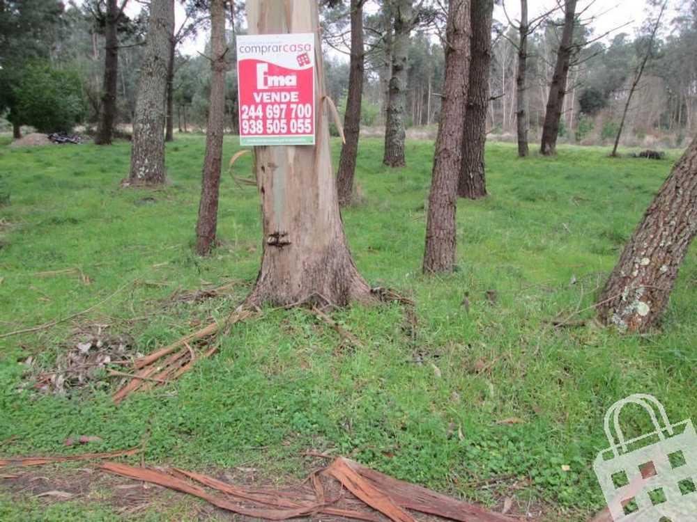Vieira de Leiria Marinha Grande terrain picture 78253
