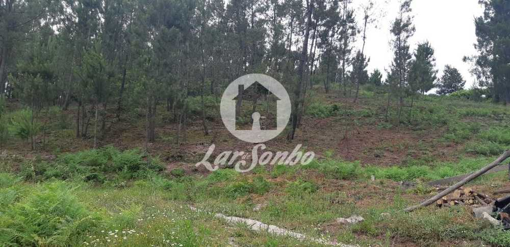 Regadas Fafe terrain picture 69653