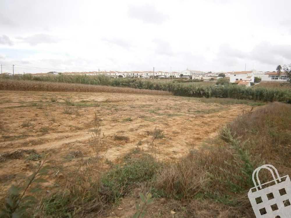 São Bernardino Peniche terrain picture 78725
