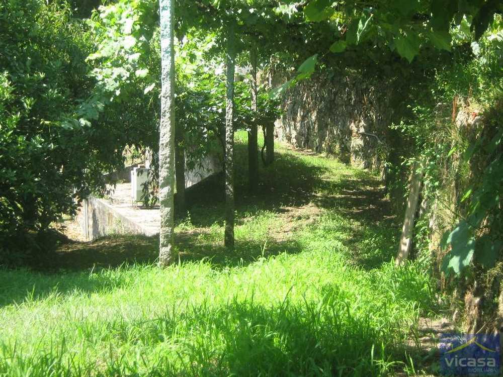Ardegão Ponte De Lima terrain picture 58446
