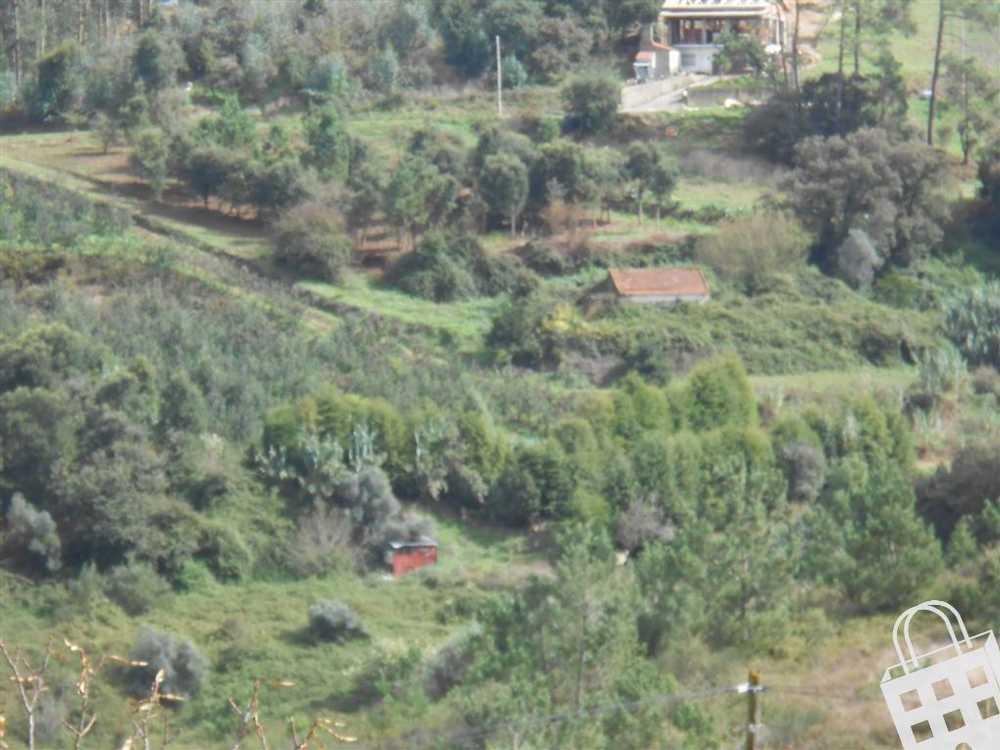 Turquel Alcobaça terrain picture 71119