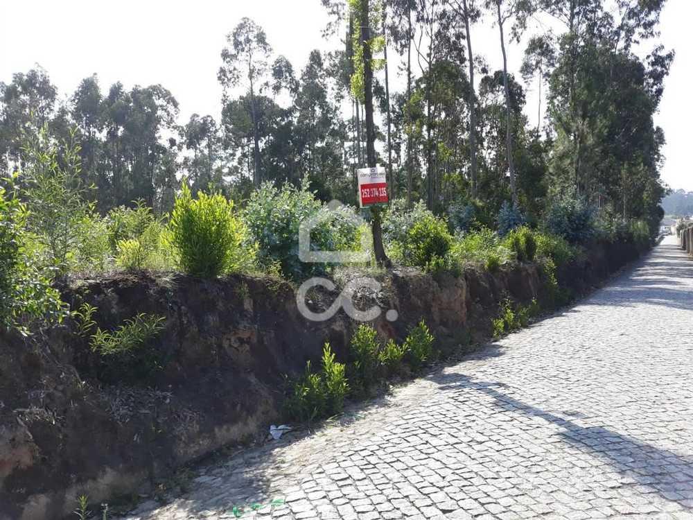 Gião Vila Do Conde terrain picture 74885