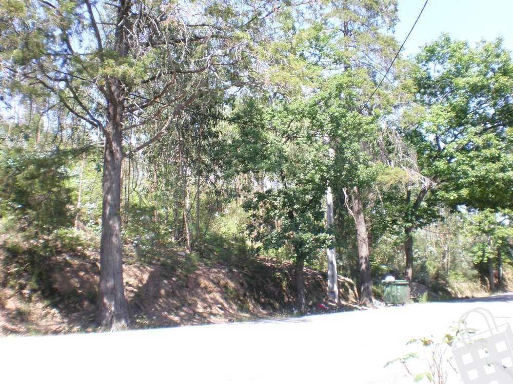 Lustosa Lousada terrain picture 77819