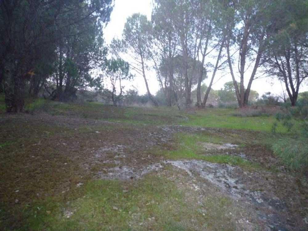 Alva Castro Daire terrain picture 65146