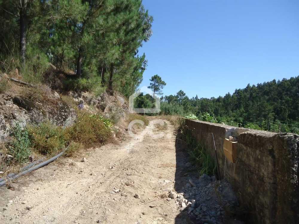 Sezures Vila Nova De Famalicão terrain picture 74804