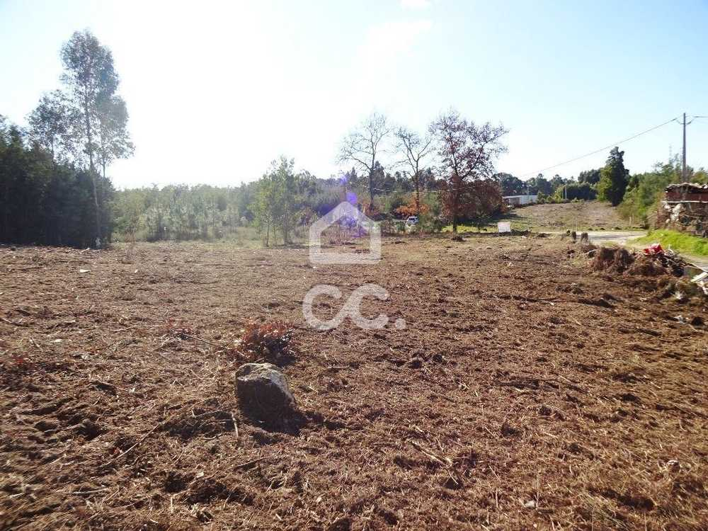 Corvos à Nogueira Viseu terrain picture 79938