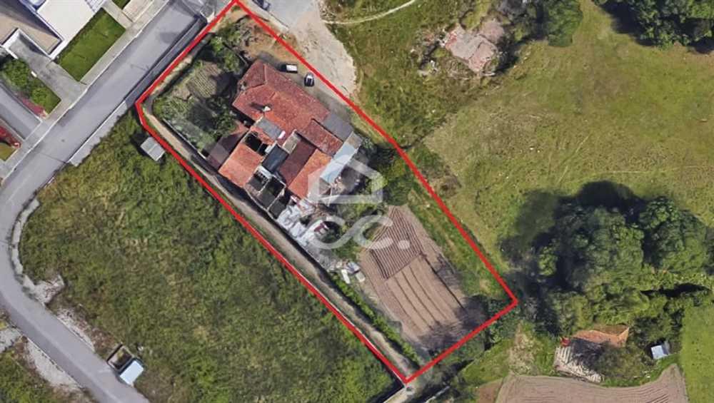 Maia Maia house picture 78122