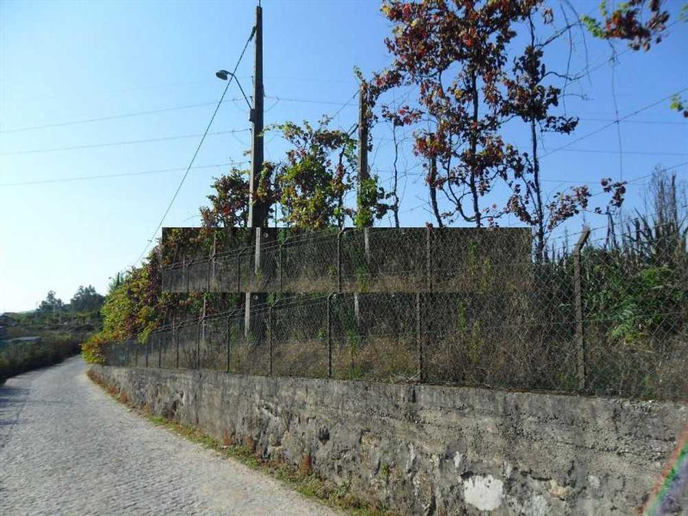 Sande São Martinho Guimarães terrain picture 57232
