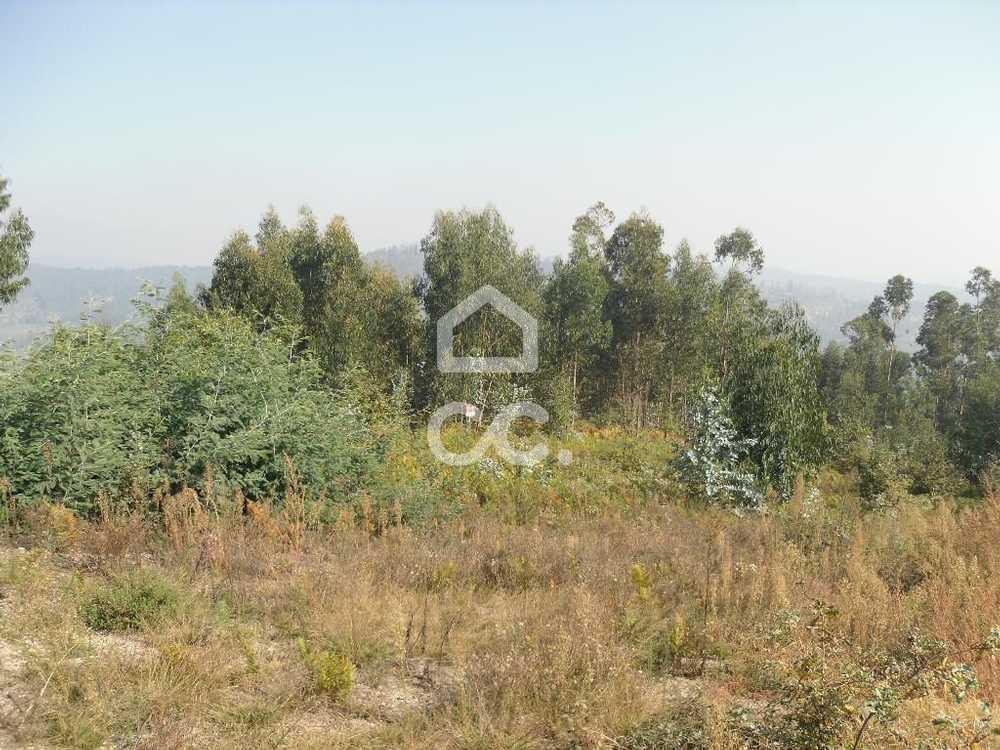Calvos Guimarães terrain picture 77444