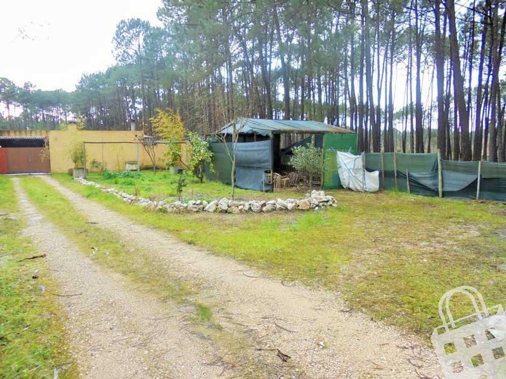Vieira de Leiria Marinha Grande terrain picture 78404