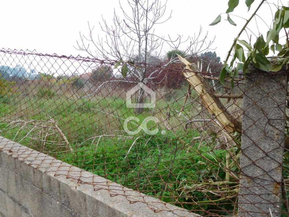 Espinho Espinho terrain picture 75201