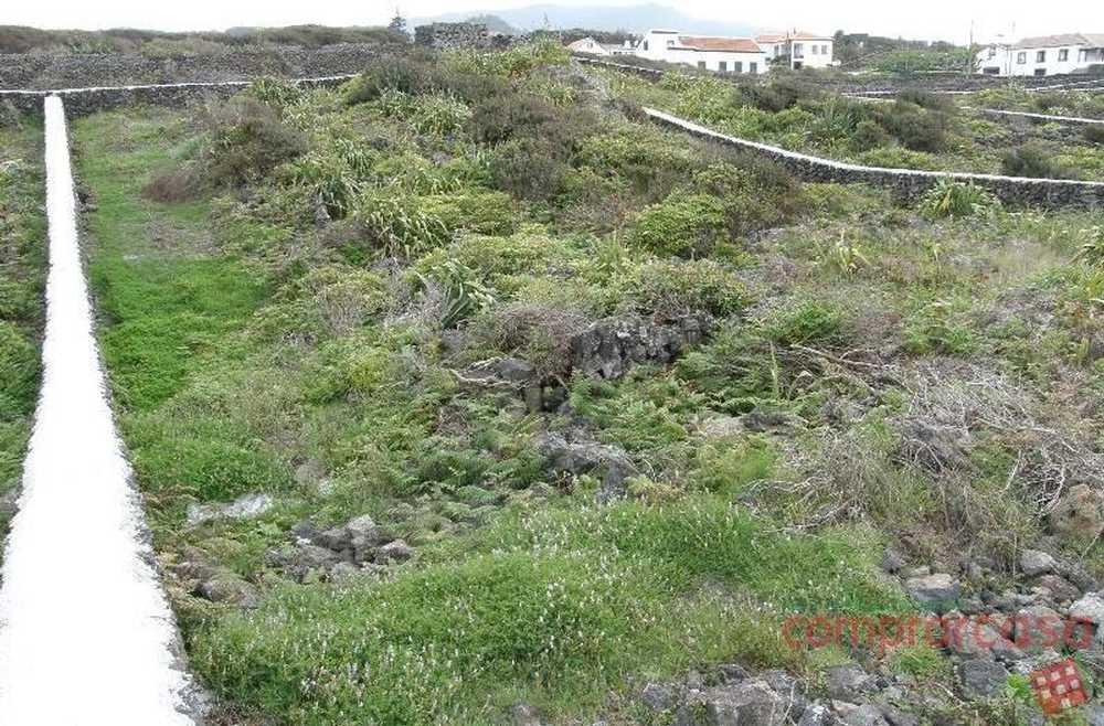 Biscoitos Praia Da Vitória terrain picture 71467