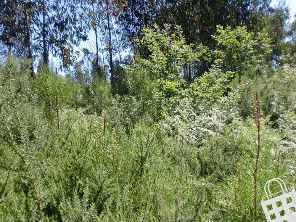 Meinedo Lousada terrain picture 77846