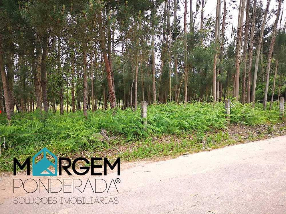 Nine Vila Nova De Famalicão terrain picture 84919