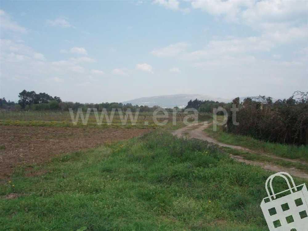 Campos Vila Nova De Cerveira terrain picture 79524