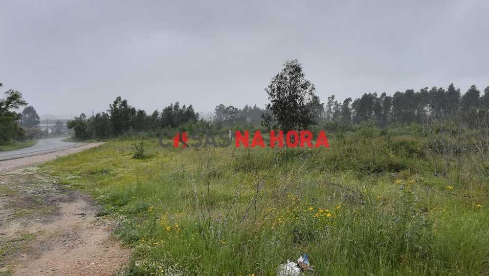 Antes Mealhada terrain picture 75888