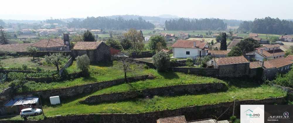 Feitos Barcelos terrain picture 70371