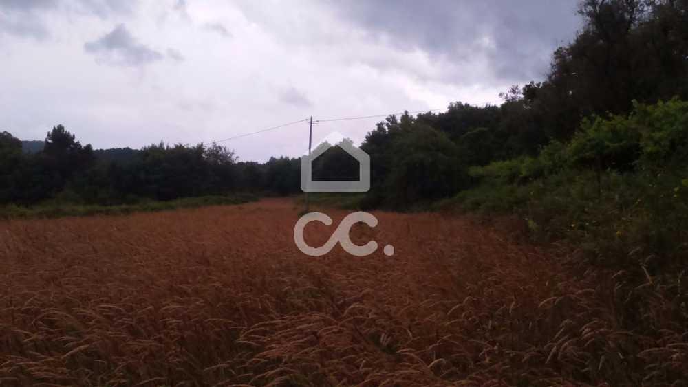 Silva Valença terrain picture 79569