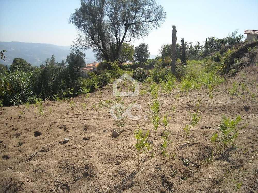Gémeos Guimarães terrain picture 77484
