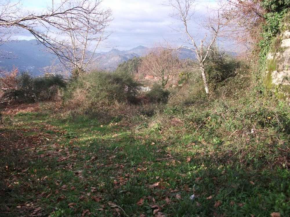 Ventosa Vieira Do Minho terrain picture 57982