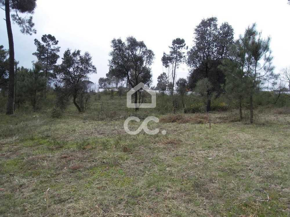 Moreira de Cónegos Guimarães terrain picture 77487
