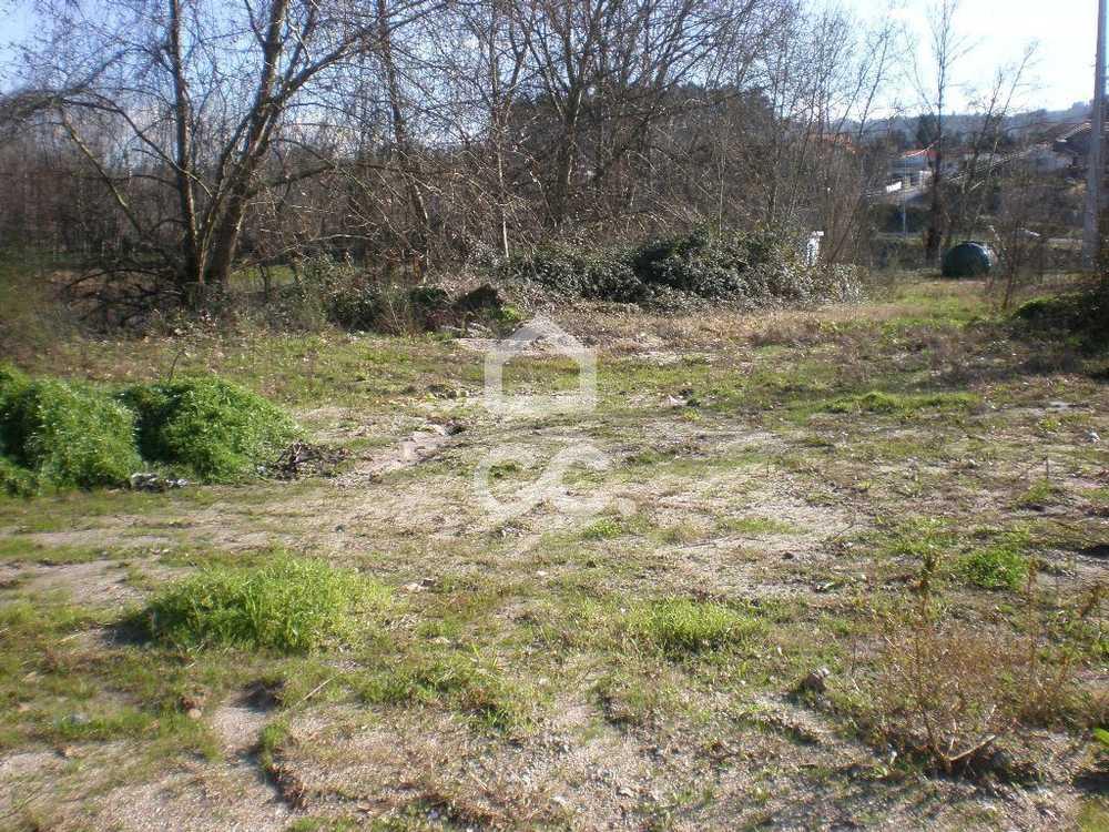 Meinedo Lousada terrain picture 77806