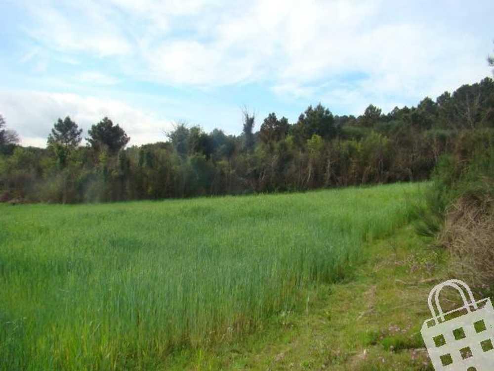 Vale de Anta Chaves terrain picture 74137