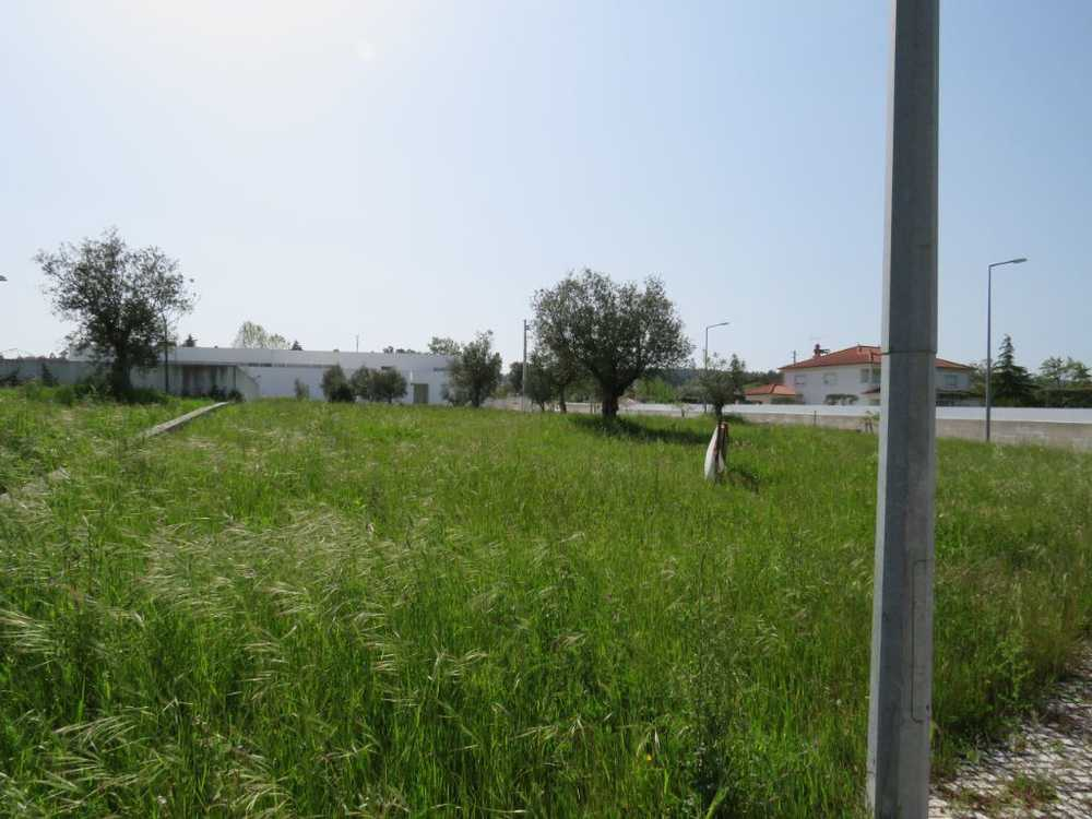 for sale terrain Formigais Santarém 1