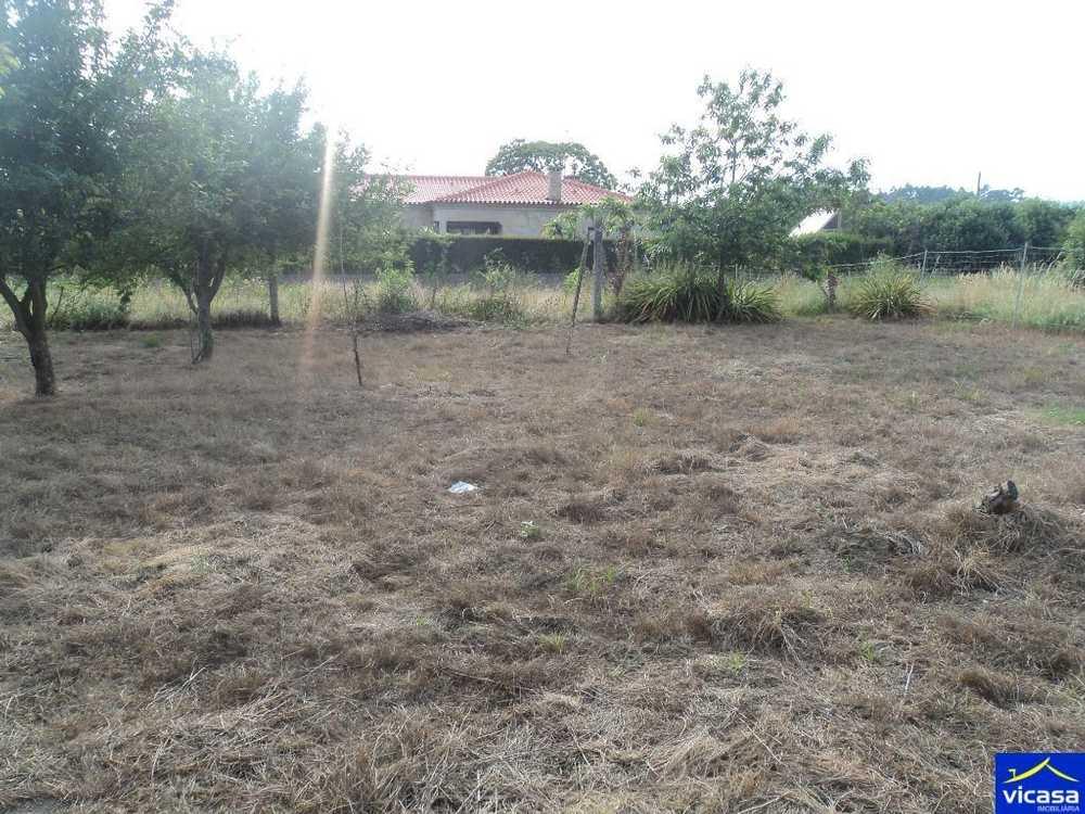Barroselas Viana Do Castelo terrain picture 85585