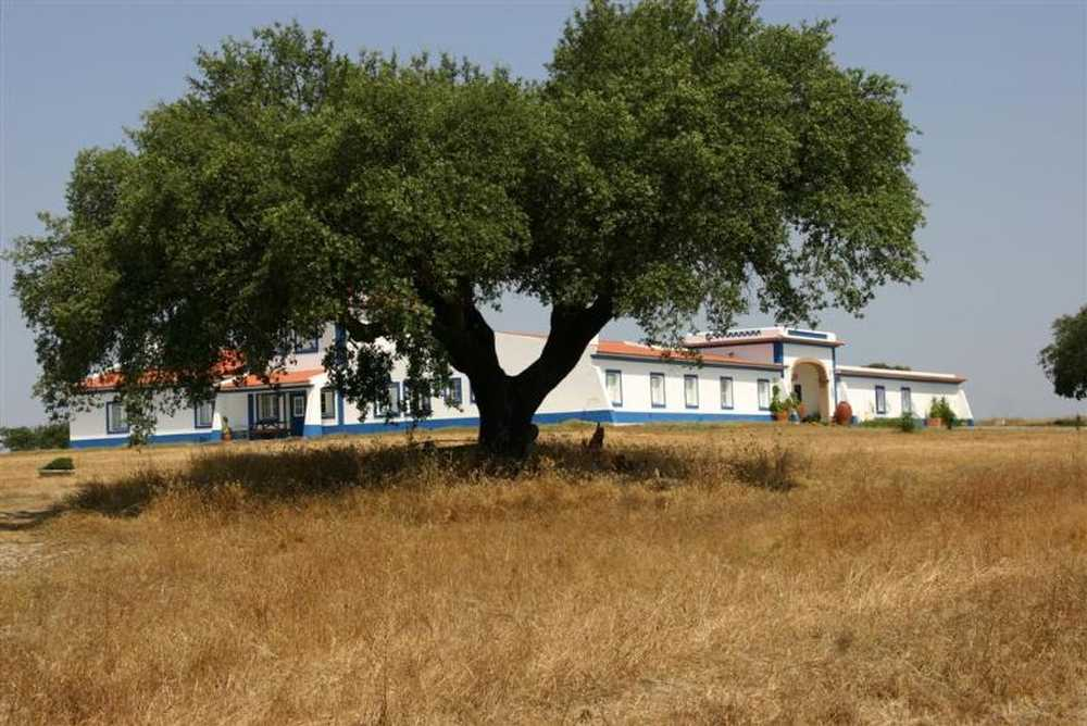 Canhestros Ferreira Do Alentejo house picture 87876