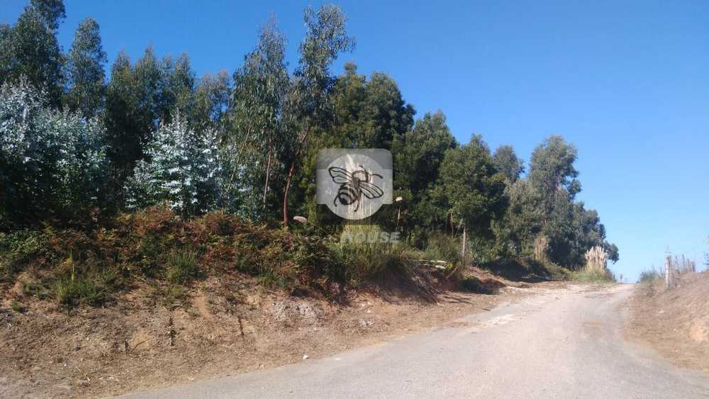 Arcozelo Vila Nova De Gaia terrain picture 88085