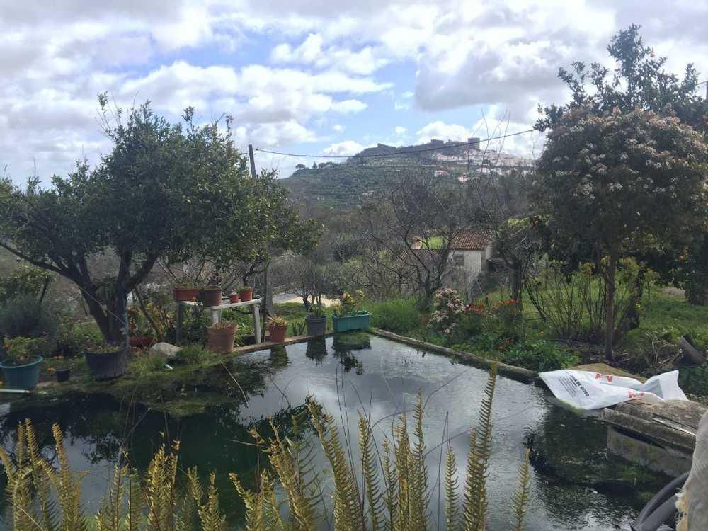 Castelo de Vide Castelo De Vide house picture 87398