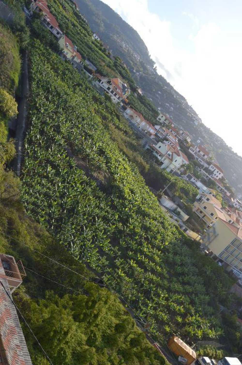 Ribeira Brava Ribeira Brava terrain picture 91871