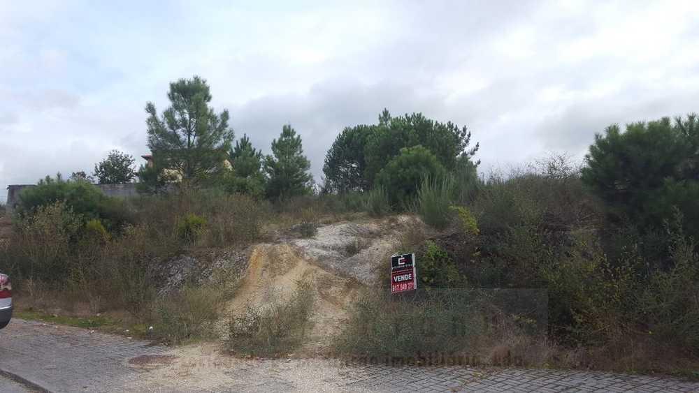 Lomba Amarante terrain picture 90211
