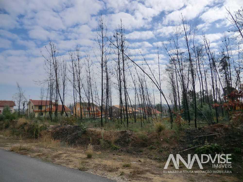 Tondela Tondela casa imagem 95324