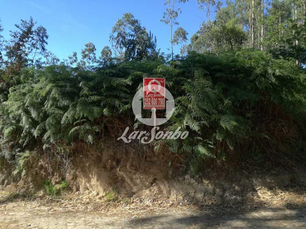Gião Vila Do Conde terrain picture 90441