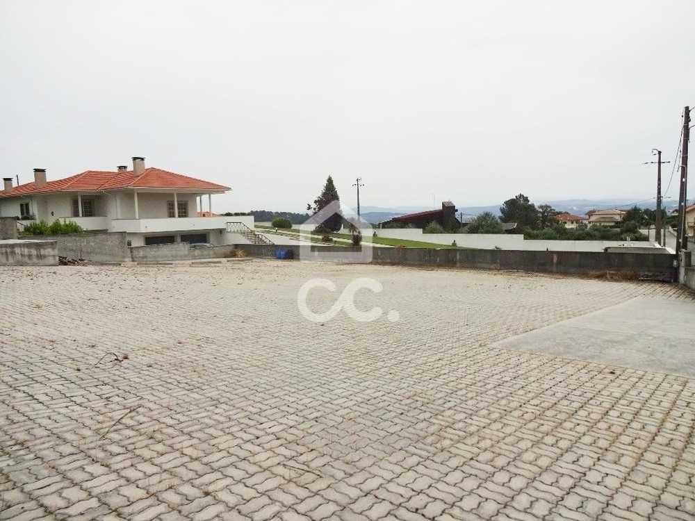 Rio Lamego terrain picture 97198