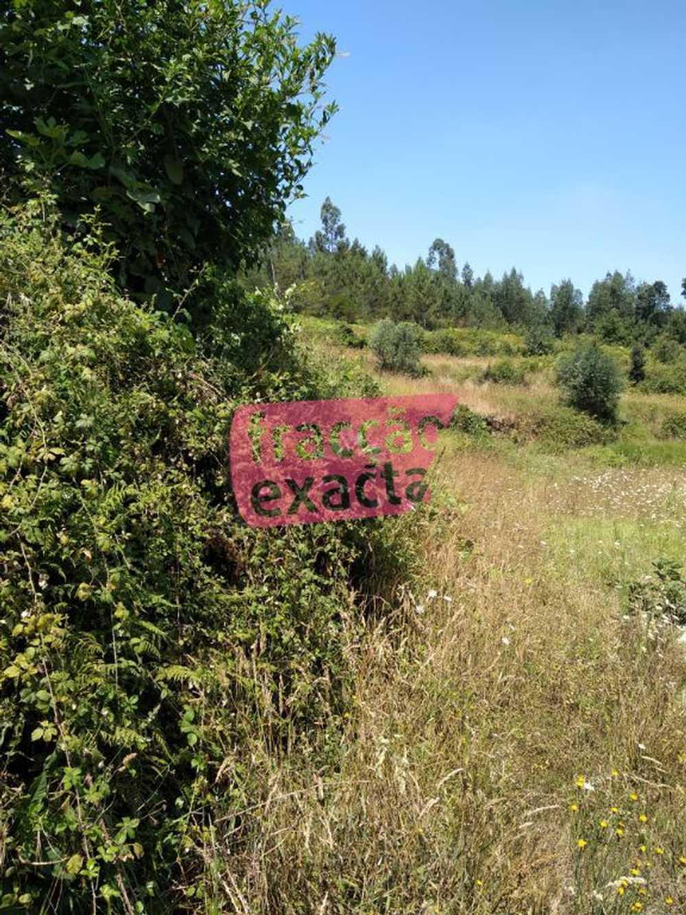 Medas Gondomar terrain picture 97251