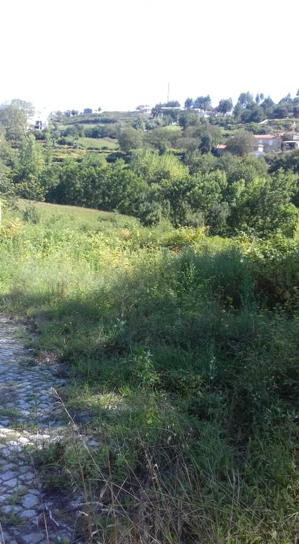 Lordelo Felgueiras terrain picture 101089